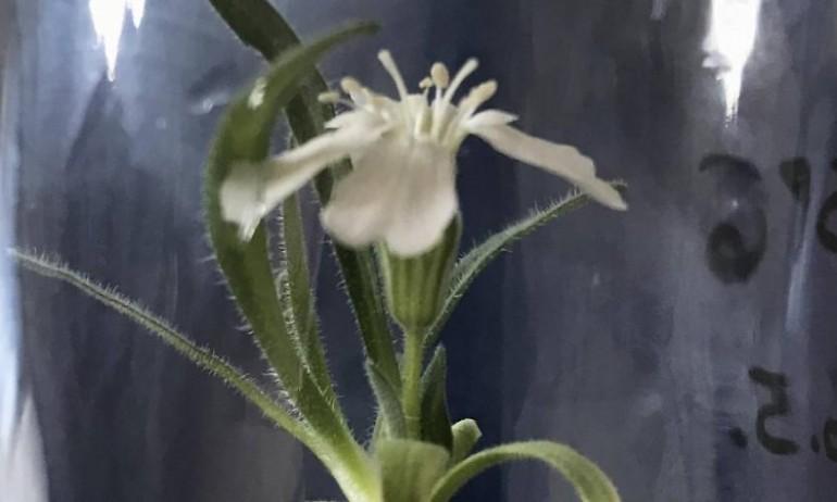U Beču procvjetala biljka stara 32.000 godina