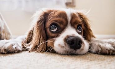 Možda niste znali ali psi više vole vlasnike nego hranu